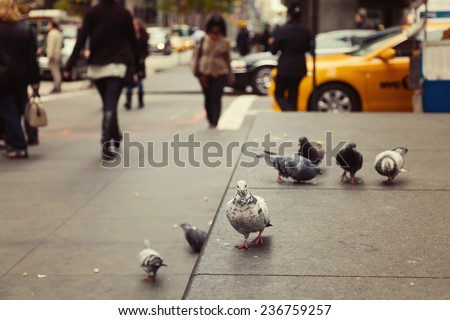 Pigeons on New York street, USA
