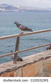 Pigeons on a railing.