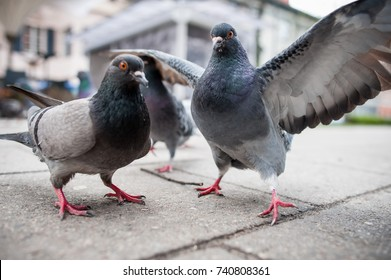Pigeons on the street.