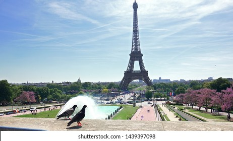 Pigeons on Trocadero fence against Eiffel Tower in Paris, France
