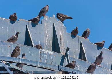 lot of pigeons on a wooden structure