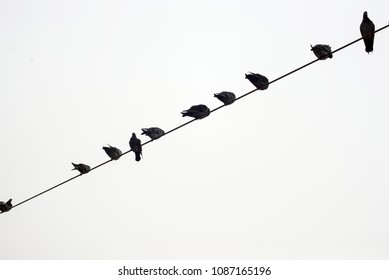 Pigeons perched on wire with sky background B&W