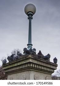 Pigeons in Public Garden