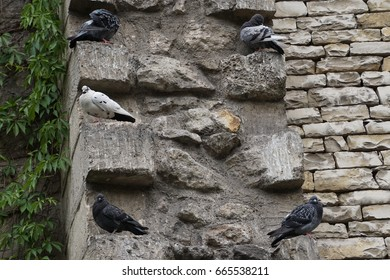 Pigeons resting on old stone wall by the park in Paris, France