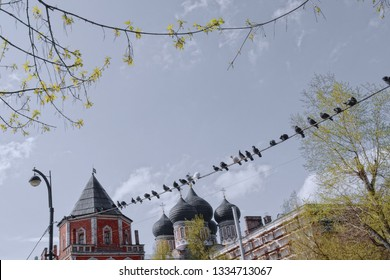 Pigeons are sitting on wires against the tops of the church