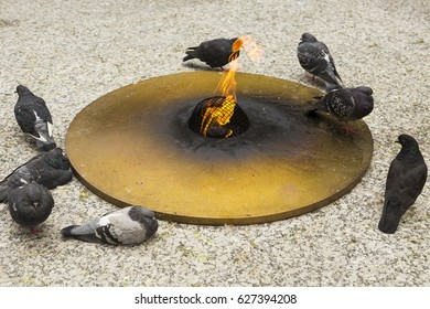 Pigeons surrounding Daley Center's Eternal Flame in Chicago
