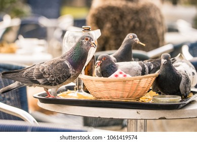 Pigeons in Vondelpark in Amsterdam, the Netherlands, eat the leftover chips that a customer left on an outdoor table at a cafe/bar.