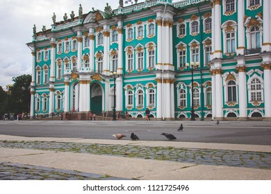 pigeons walking in the square near the Hermitage in St. Petersburg