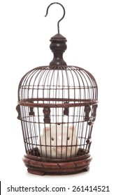 piggy bank trapped in a cage cutout