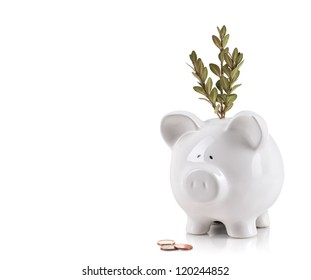 Piggy bank with tree growing from it. Growing your money concept