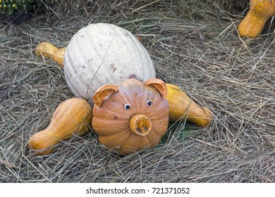 """Piglet made from large ripe pumpkins. Festival """"Golden Autumn"""". September 2017, Moscow, Russia."""