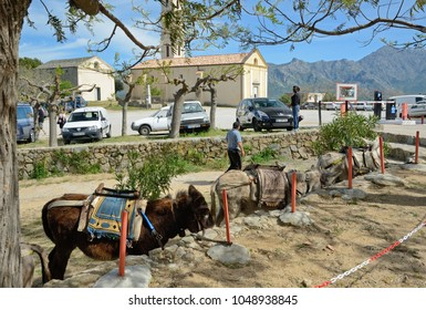 PIGNA, CORSICA - APRIL 20 2016: Cars and donkeys are parked near the ancient church in the hilltop village Pigna. PIGNA, CORSICA - APRIL 20 2016.