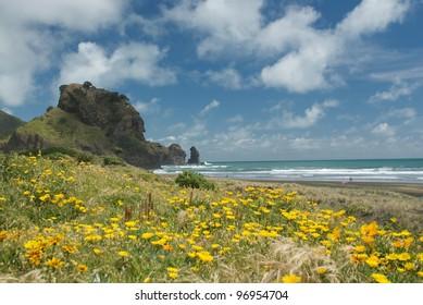 Piha beach in New Zealand during summer