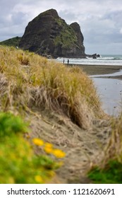 Piha black sand beach featuring cliffs and rock formations at Waitakere, Auckland in New Zealand