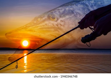 Pike fishing. Photo collage of silhouette of angler hands with spinning rod on soft focus muskie fish on sunset background. - Shutterstock ID 1940346748