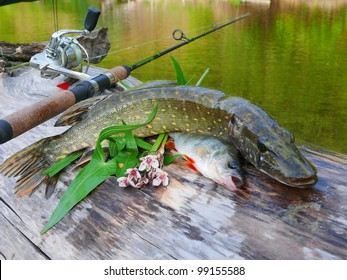Pike and perch. Fishing theme.