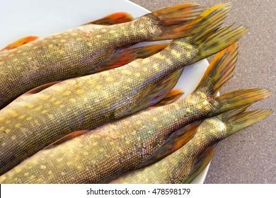 Fishtail Fish