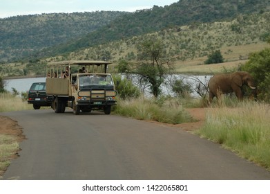 PILANESBERG, SOUTH AFRICA- FEBRUARY 17, 2005. Close encounter with a magnificent African Elephant on a game drive in the Pilanesberg National Park.