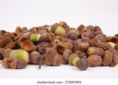 A pile of acorns isolated on a white background.