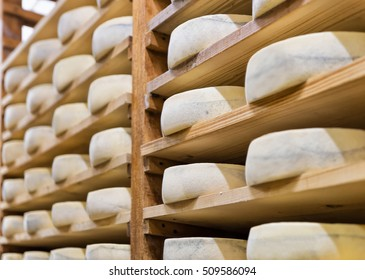 Pile of aging Cheese on wooden shelves at maturing cellar in Franche Comte creamery in France
