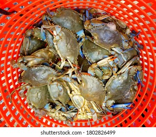 A pile of alive blue crabs inside of a red bucket