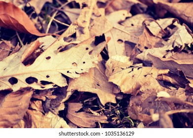 A pile of autumn leaves