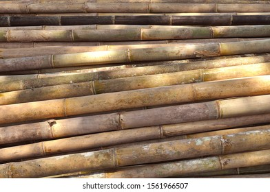 Pile of Bamboo Pole Texture With Natural Pattern
