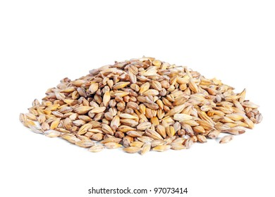 Pile Barley grain (Hordeum) isolated on white background. Barley is a major cereal grain, a member of the grass family.