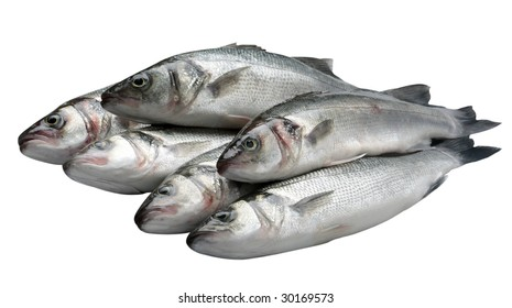Pile of bass fish on white background