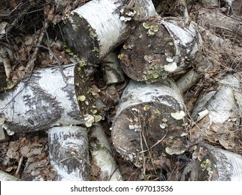 Pile of birch tree logs with mushrooms. Closeup of chopped tree trunks. Background texture