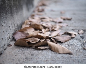 pile of brown leaves on the floor. selective focus on the dry leaves.