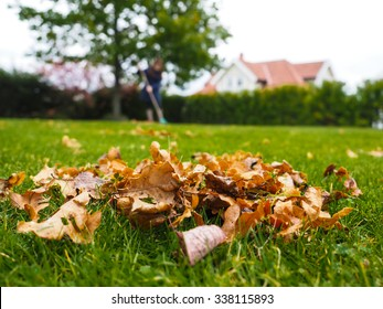 Pile of brown oak leaves at autumn over fresh green grass