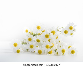 pile of camomille on white background