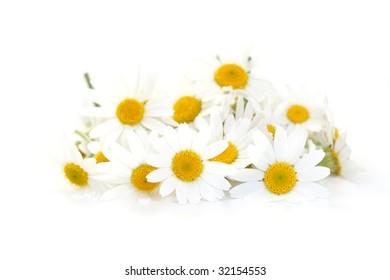 pile of camomille on white background - alternative medicine