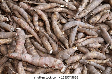 pile of cassava, cassava for tapioca flour industry or ethanol industry, raw yucca cassava tuber, raw manioc cassava in top view for background