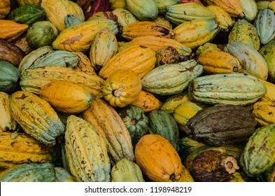 A pile of cocoa pods, Akim Tafo, Eastern Region, Ghana.