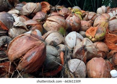 a pile of coconut coir or coconut shell