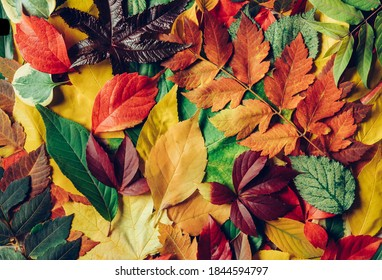 Pile of colorful autumn leaves