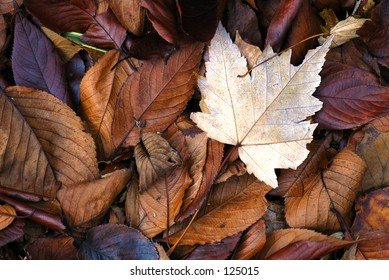 Pile of colorful fall leaves of different sizes.