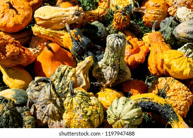 Pile of colorful pumpkins and gourds