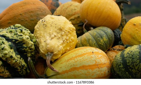 Pile of colorful yellow pumpkins