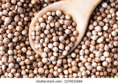 Pile of coriander seeds with some in a wooden spoon