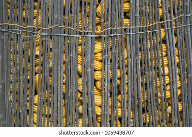 Pile of corn in a bamboo fence for livestock.