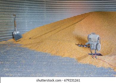 Pile of corn in a grain bin.