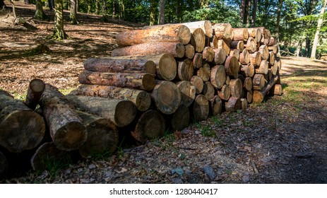 Pile of cut three trunks