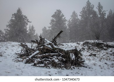 A pile of dead wood with fog in the background in Vernon BC