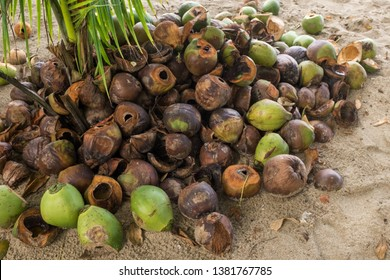 A pile of discarded used coconut husks, lots of brown and greens.