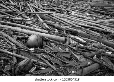 Pile of dried bamboo, coconut, and rope after flood. Grey picture of old wood. decadent wood. worthless and useless concept. Hopeless and despair concept. Time with the change of things.