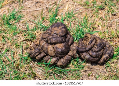 Pile of the dried cow or buffalo dung excrement on the green grass in rural