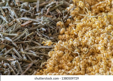 Pile of dried European elderberries (Sambucus nigra) next to a pile of dried snake grass stems (Equisetum)